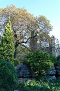 York Museum and Gardens