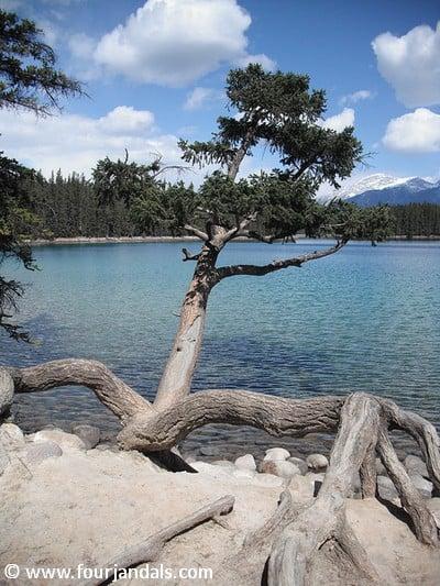 Weekly Hump Day Photo - Lake Beauvert in Jasper National Park