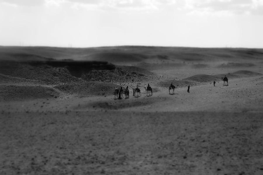Camel Safari in Cairo