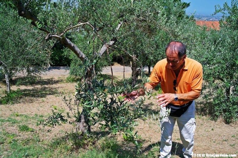 Mario Il Borgo Olive Oil