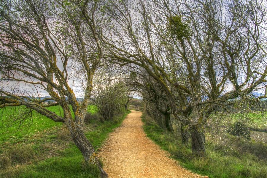 Natural arches - Camino de Santiago