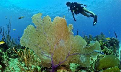 Outdoor Activities in Cuba - Diving