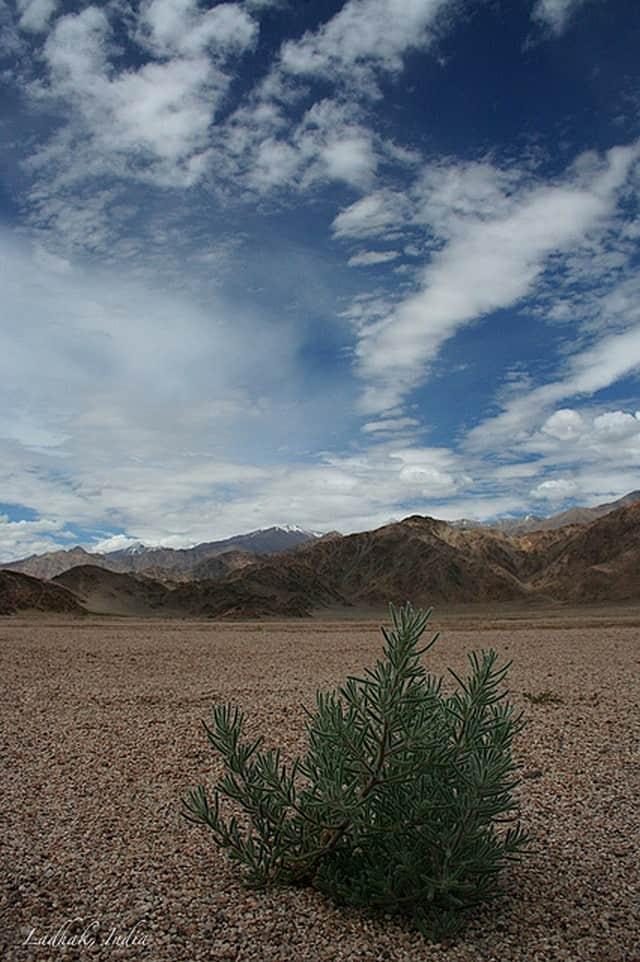 Outdoor Activities in Leh, Ladakh - Trekking