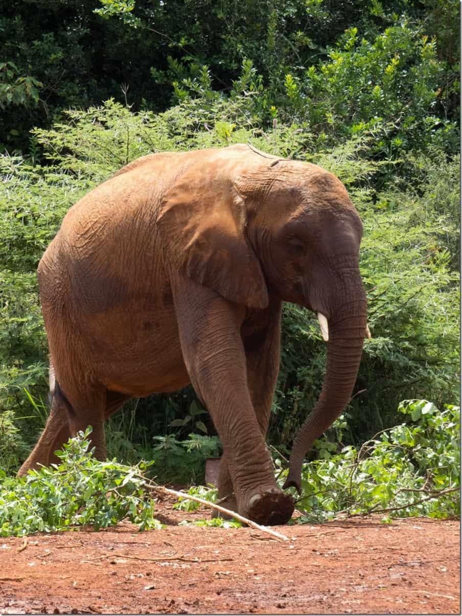David Sheldrick Elephant Orphanage in Kenya
