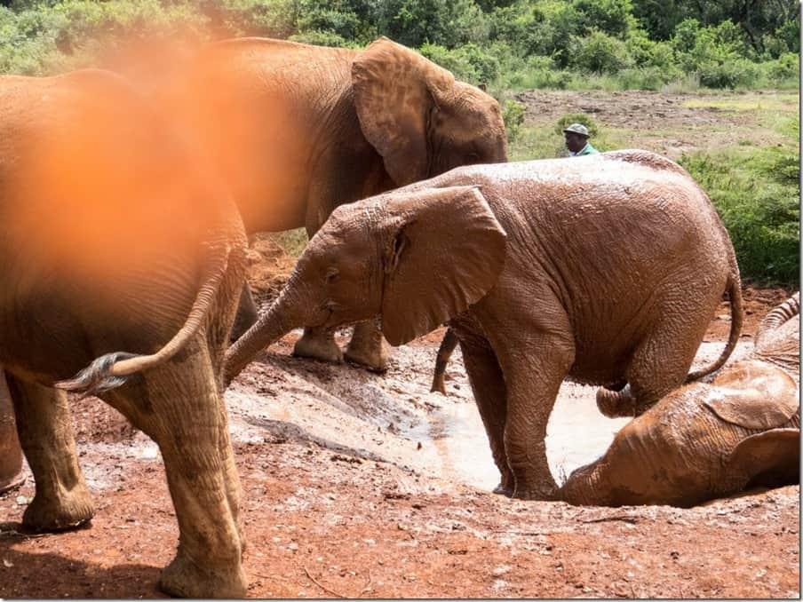 David Sheldrick Elephant Orphanage in Nairobi