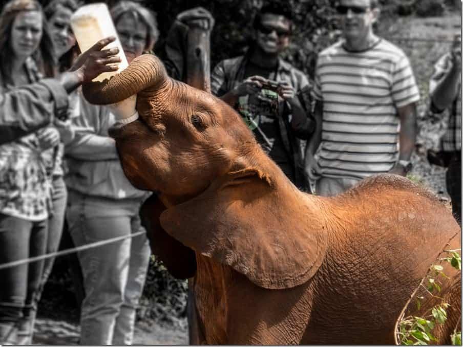 Elephant feeding in Kenya