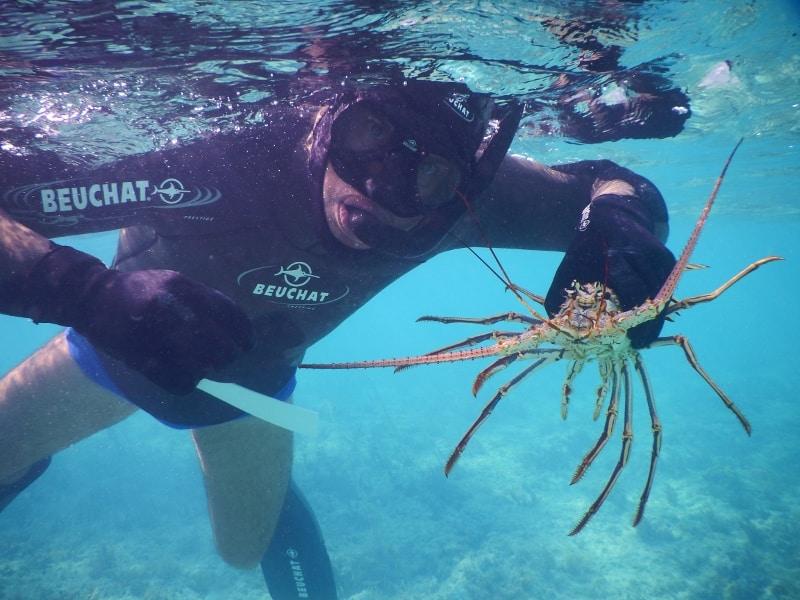 Long Island Bahamas crayfish